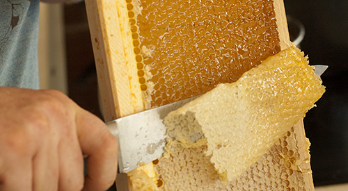 Alameda Natural Grocery Honey Bees Extraction 1